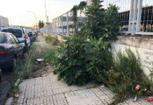 Segunda campaña de limpieza de malas hierbas